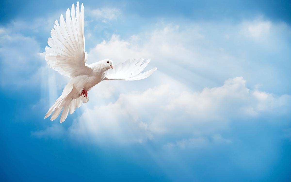 Kekuatan Roh Kudus (Zakharia 4 : 6)