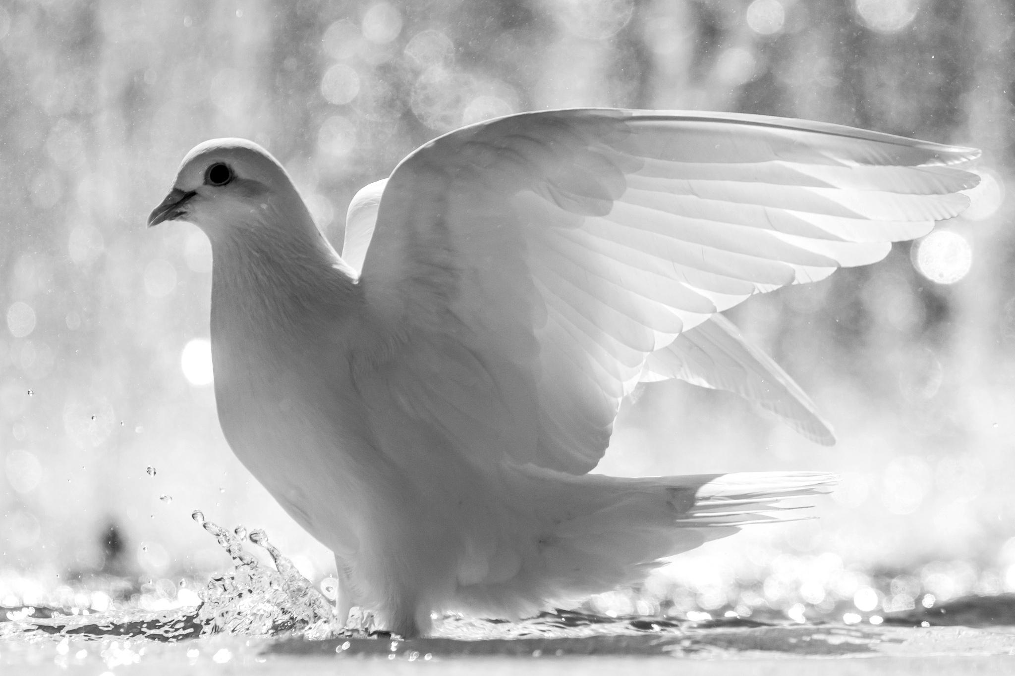 Roh Kudus Air Hidup (Yohanes 14 : 16-17)